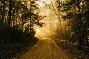 A path with sunshine