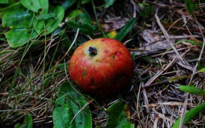 Dharma Wondrous Strange: A Bad Apple