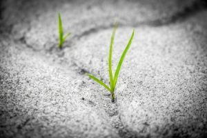 Green shoots coming through cracks in pavement
